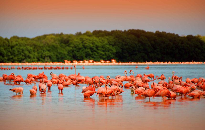 rio-lagartos-yucatan-maya-vacanze2