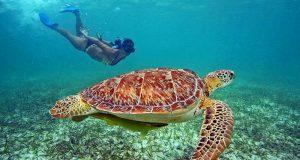 snorkeling-tour-coloniale5